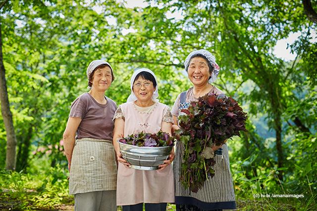 「収穫したシソを持つ農婦3人」(c)hi-bi/amanaimages