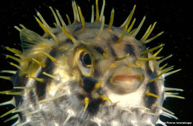 サンゴ礁で生き残る技術 フレッド・バヴェンダム ミンデン・ピクチャーズ