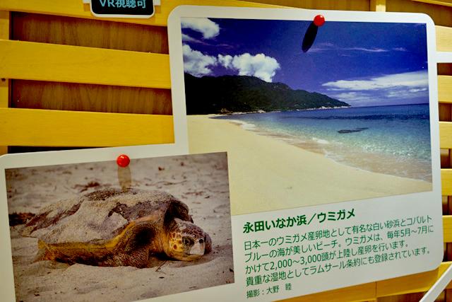 ウミガメの産卵地である永田いなか浜