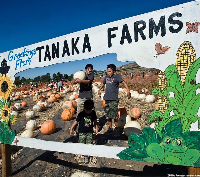 アーバイン Tanaka Farms
