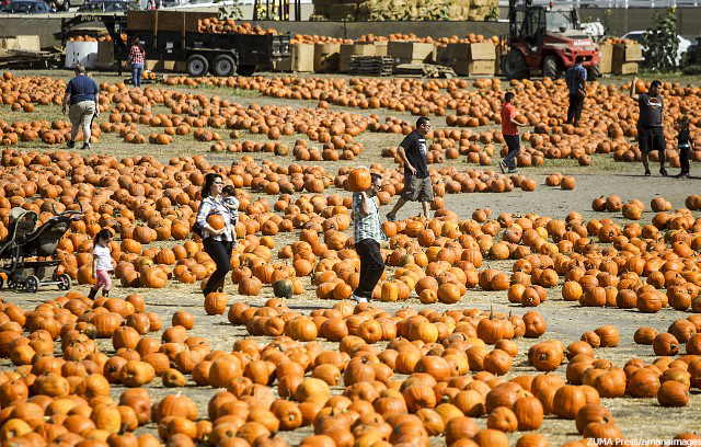 ポモナ Pumpkin Festival and Pumpkin Patch