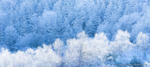 今どこ撮る? 今年の冬景色はここ!